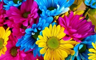 Hangi Çiçek Ne İfade Ediyor?